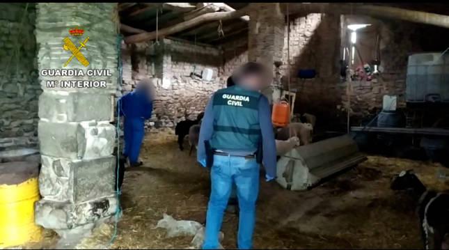 Foto de agentes de la Guardia Civil en la explotación ganadera de Viana donde han encontrado a los animales.