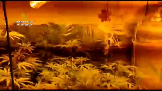 Vídeo: Localizada en Málaga una finca con más de 18.000 plantas de marihuana