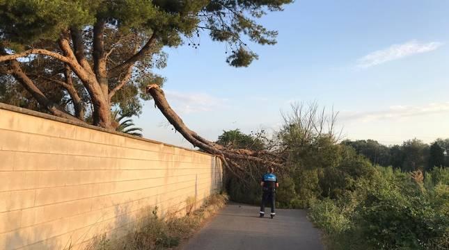 Imagen de un agente de Policía Local de Tudela junto a la rama caída en el camino de la Mejana.