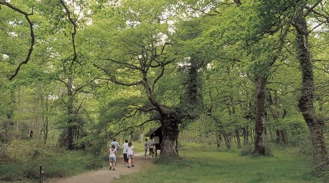 Fotografía decida por el Departamento de Turismo del Gobierno de Navarra.