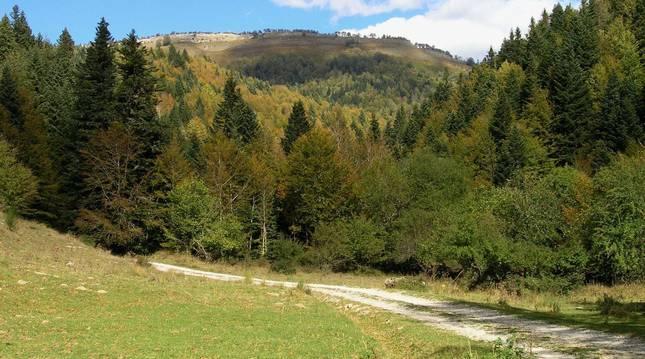 Una imagen del sendero de Errekaidorra, en la selva de Irati (Navarra).