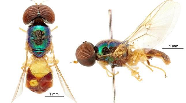 Foto facilitada por CSIRO de uno de los ejemplares encontrados en Australia.