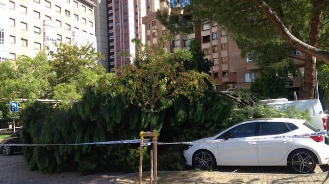 Un pino se cae en el Paseo de Nájera, junto al parque de Yamaguchi