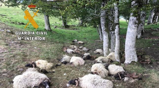Una vaca y 32 ovejas, muertas en Sorogáin, al parecer por un rayo