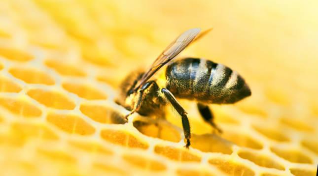 Una abeja se posa sobre una colmena