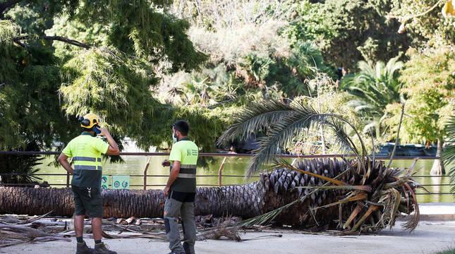 Un muerto y una herida al caerles encima una palmera en Barcelona