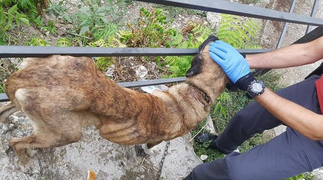 Investigado en Funes por maltratar a una perra