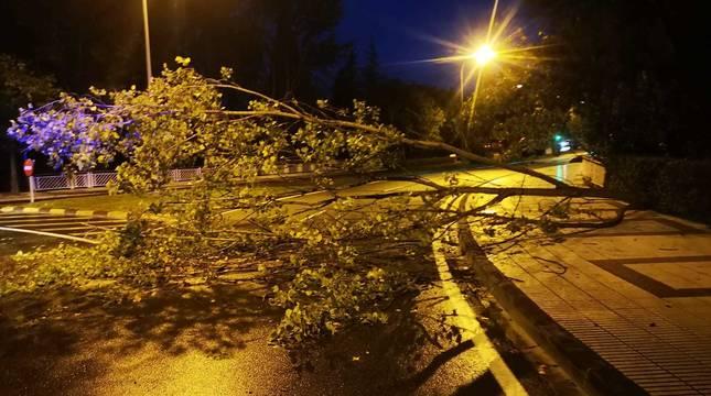 El viento derriba un árbol en la calle Tajonar, junto a la UPNA