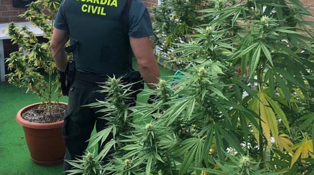 Intervenidas cinco plantas de marihuana en un domicilio en Zizur Mayor