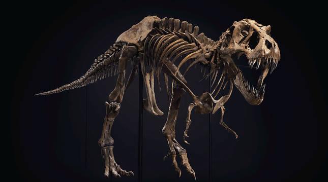Imagen cedida opr Christie's del T. Rex Stan subastado por 32 millones de dólares.