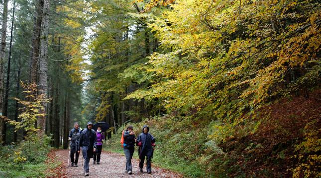 Un grupo de visitantes camina a través de una senda de la Selva de Irati en el otoño de 2019.