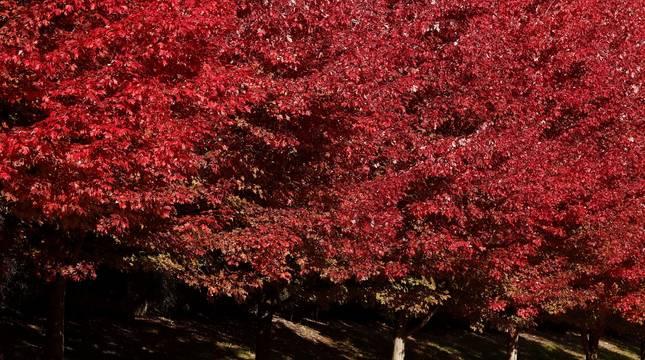 Una persona pasea con su perro por un parque de Pamplona donde los árboles tienen el color del otoño.