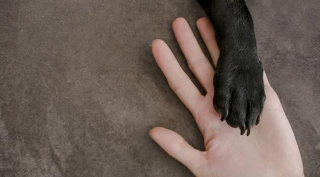 Detalle de un perro 'dándole' la pata a su dueño