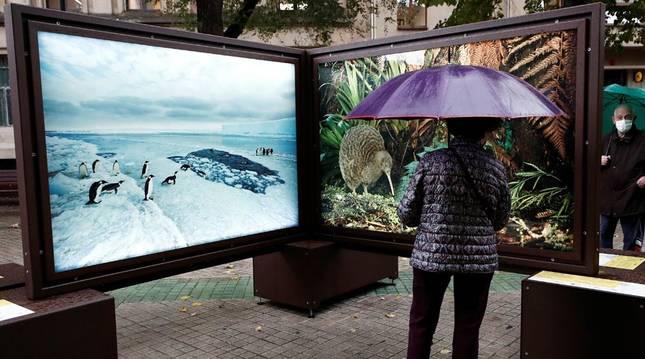 El Paseo de Sarasate de Pamplona acoge desde la exposición fotográfica 'De Polo a Polo'.