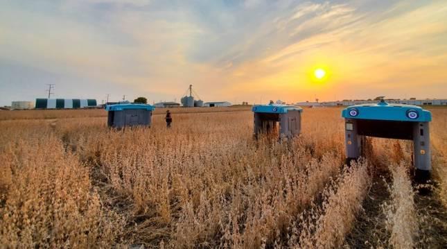 Aspecto de los robots agricultores de Google