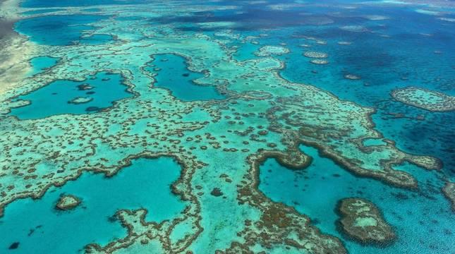 Descubren un coral más alto que el Empire State en Australia