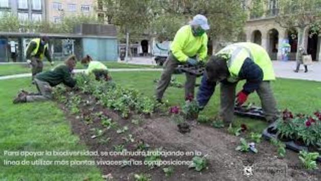 Vídeo de la plantación en Pamplona de bulbos y plantas en jardines y parterres