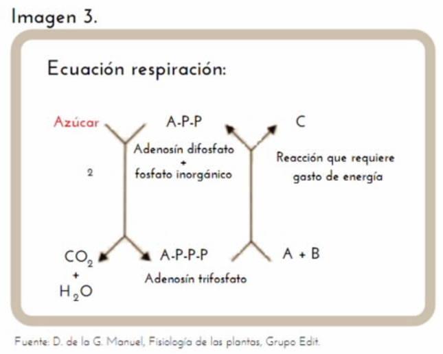 El azúcar y su adicción, por María Jáuregui López