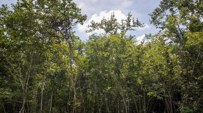 Foto de árboles en los Valles del Tuy (Venezuela).