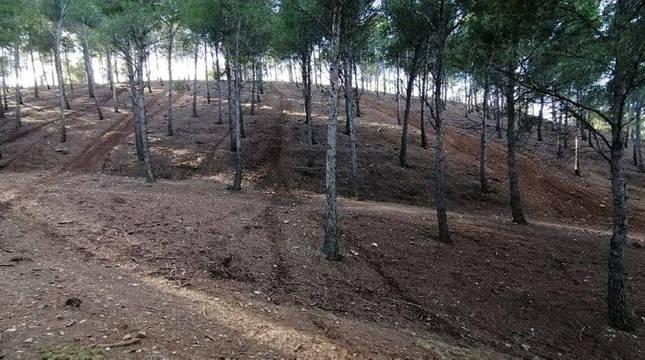 Huellas de motos en el pinar de Santa Quiteria de Tudela.