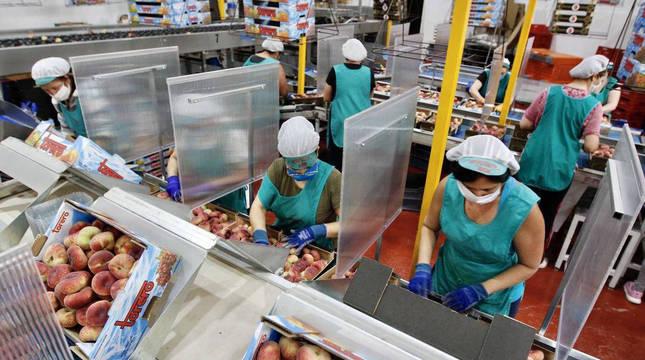 Varias trabajadoras en una empresa murciana de distribución de frutas.