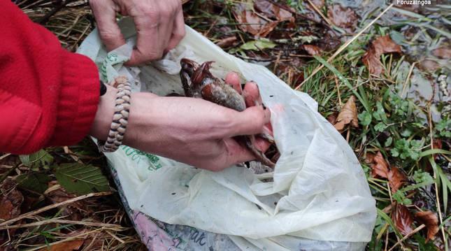 Dos investigados por capturar furtivamente 52 ranas bermejas en una zona de especial conservación