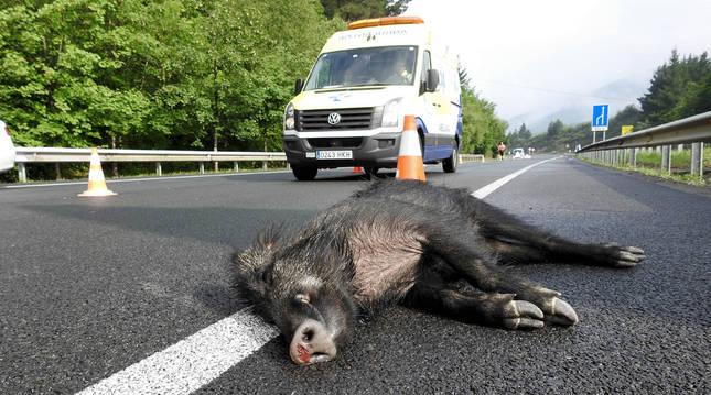 Solicitan un paso para animales sobre la N-121-A para evitar accidentes
