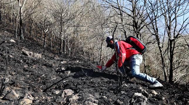 Las causas del incendio que se originó en Bera y que ha calcinado 1.800 hectáreas en Navarra, Guipúzcoa y Francia están siendo investigadas por la Policía Foral para determinar si el fuego ha sido fortuito o provocado, aunque parece que la actividad humana está detrás.