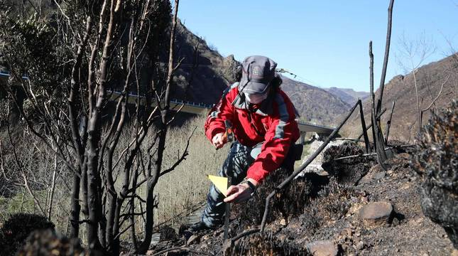 Fotos de la investigación policial del incendio de Bera y Lesaka