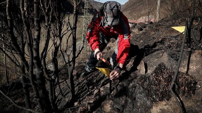 Un equipo de la Policía Foral ha comenzado este martes la investigación de campo en el punto en el que se cree que comenzó el fuego que originó el incendio en Bera el pasado sábado y que ha calcinado unas 1.800 hectáreas.