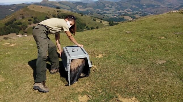 Foto de Paula Bescós, Guarda de Medio Ambiente del Gobierno de Navarra.