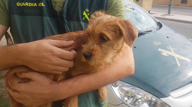 Un cachorro, en brazos de un agente de la Guardia Civil.