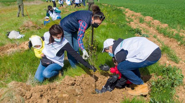 Empleados de Siemens Gamesa junto a sus familias plantan algunos árboles.