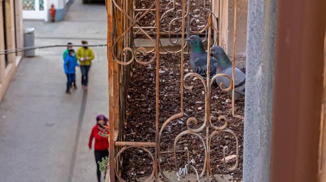 Imagen de un balcón de la calle Comercio de Estella, con montones de excrementos de las palomas que han anidado en su interior.