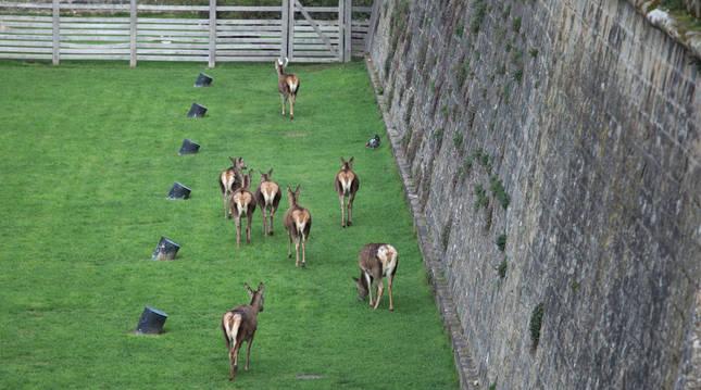 El parque de la Taconera alberga actualmente a ocho de los cuarenta ciervos que tuvo anteriormente.