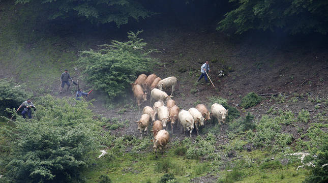 Un grupo de ganaderos conduce a reses a la marca de Erdiz.
