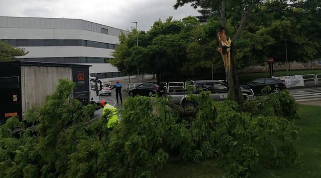 Un agente de la Policía Local de Villava regula el tráfico mientras efectivos de Jardinería trabajan en la retirada de la rama.