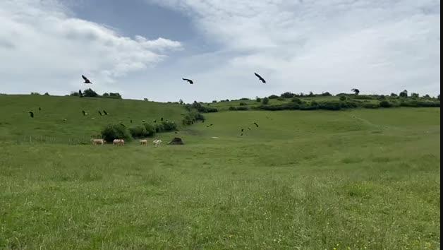 Buitres en el valle de Odieta