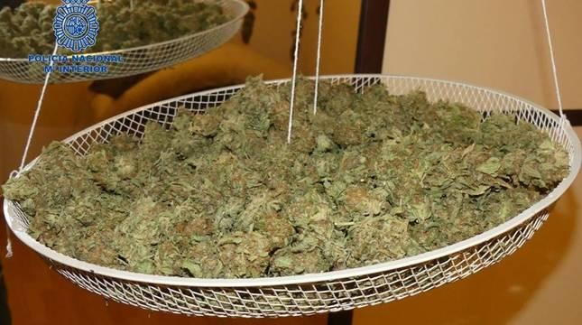 La marihuana estaba lista para ser comercializada.
