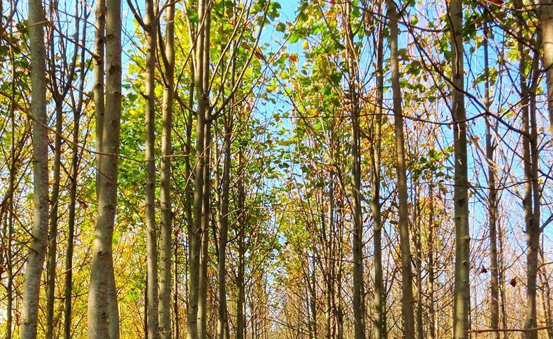 Imágenes del otoño de los lectores.ÓSCAR RIVED