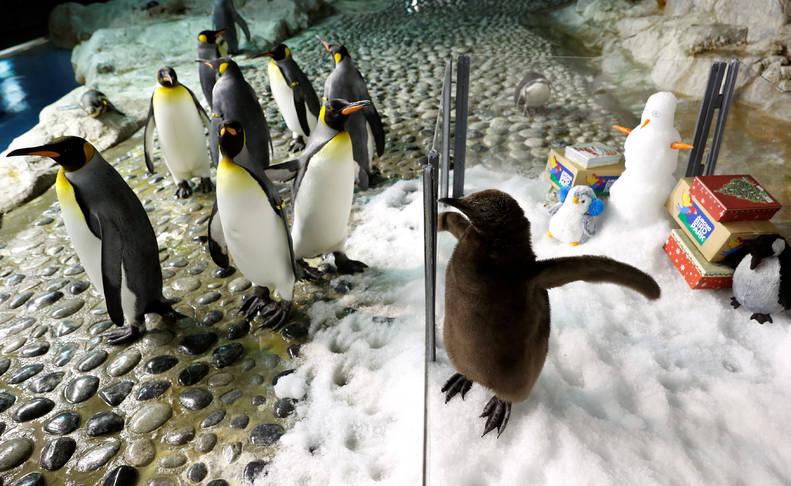 Pingüinos en Singapur