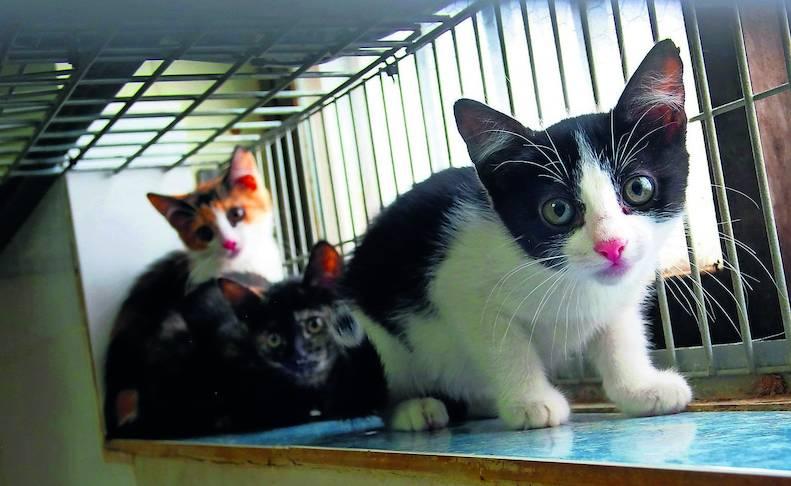 Fotos de algunos de los gatos que actualmente se encuentran en la Fundación Protectora de Animales de Pamplona, principales víctimas de la realidad del abandono y del maltrato, que generalmente se agudiza durante el mes de julio.