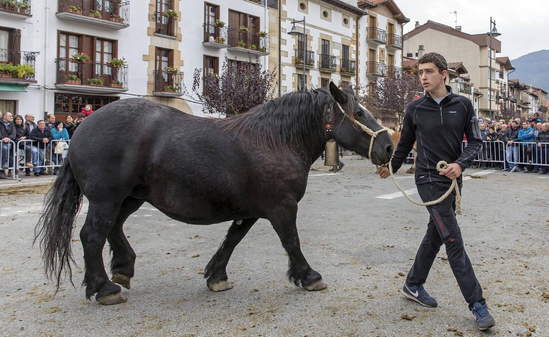 Ferias de Alsasua (1/15) - El tercer domingo de octubre tienen lugar en Alsasua las ferias de ganado - Navarra -