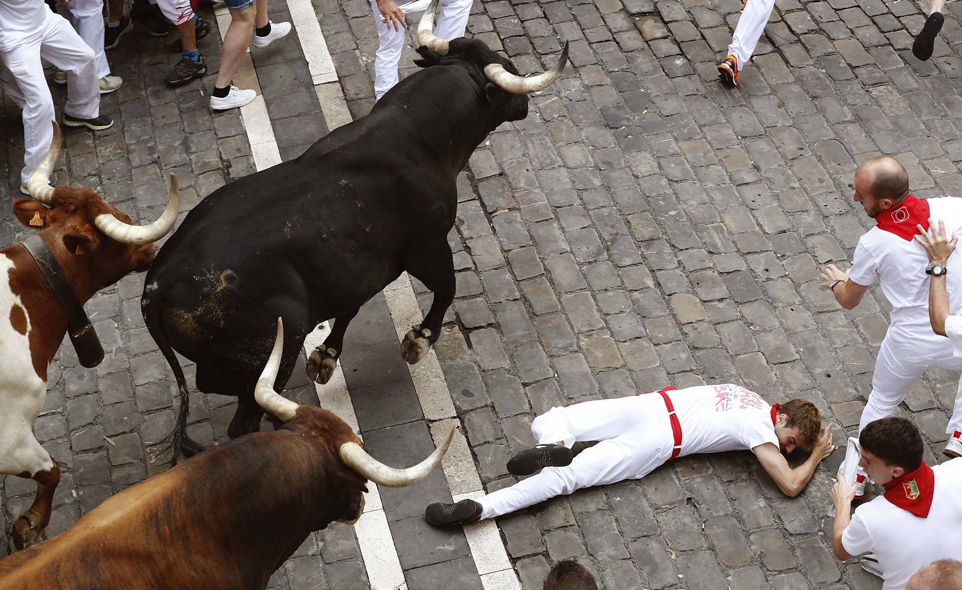 Bajo los 620 kilos de 'Hurón' (1/3) - Un mozo resultó pisoteado en el octavo encierro de los Sanfermines tras ser pisoteado por uno de los Miura en la entrada a la plaza del Ayuntamiento. - San Fermín -
