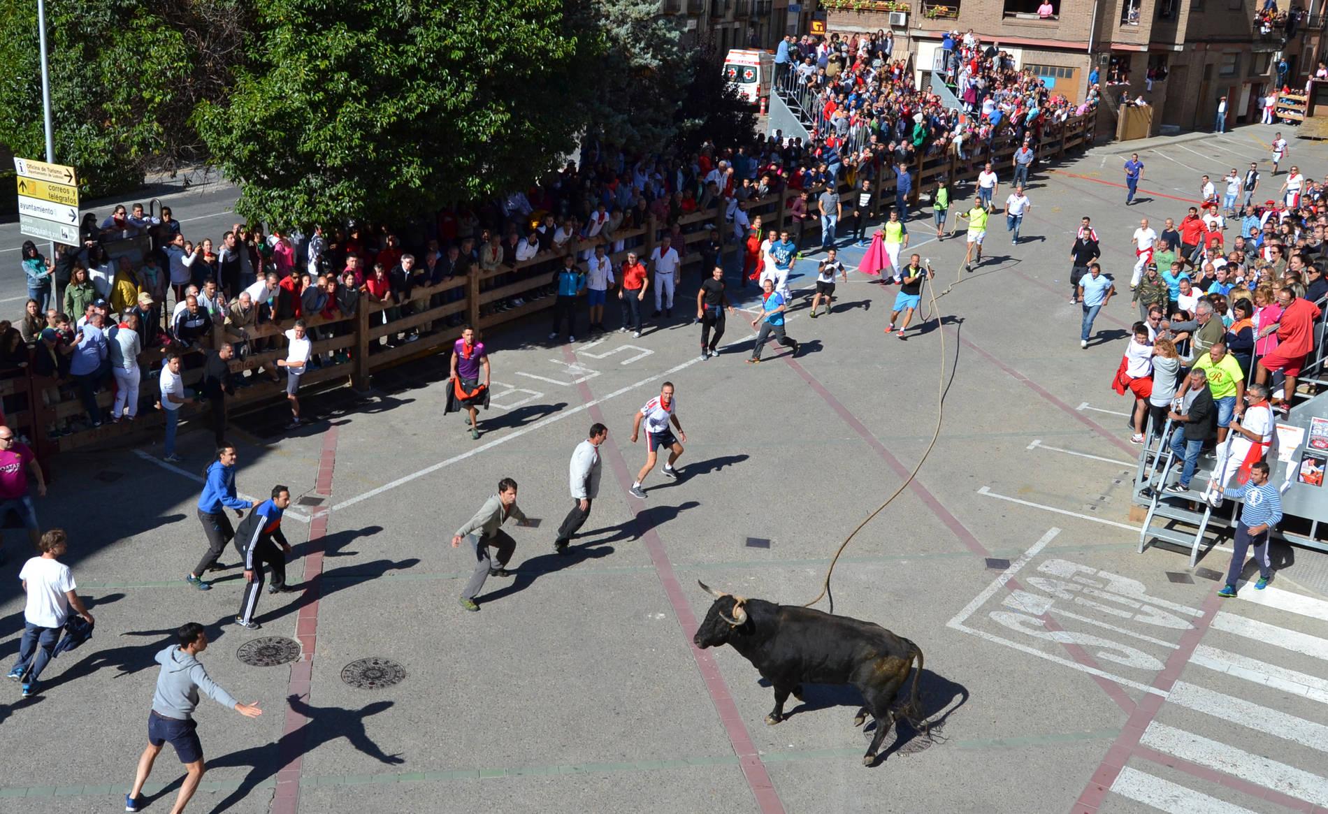 Toro con soga en Lodosa (1/7) - Galería de imágenes del toro con soga en Fiestas de Lodosa - Tierra Estella -