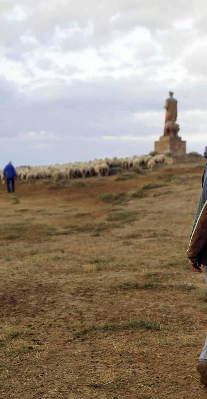 Miles de ovejas ya pastan en Bardenas
