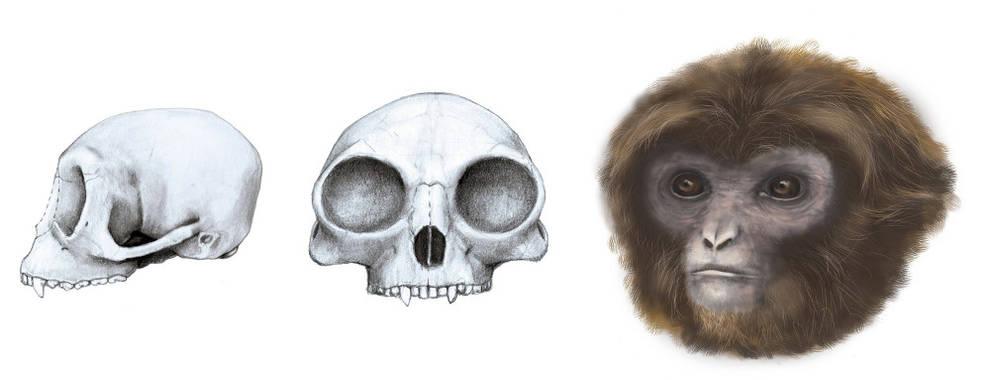 Ciencia - Hallan un eslabón clave en la evolución en un vertedero ...