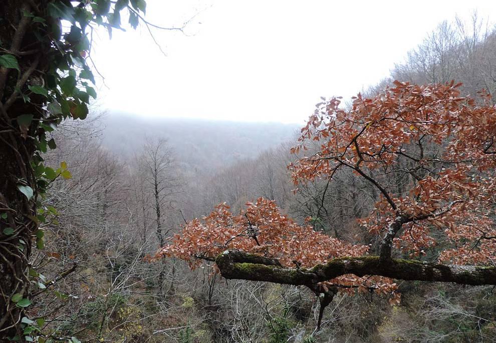 Fotos del otoño de los lectores (1/327) - Fotos del otoño de los lectores - Navarra -