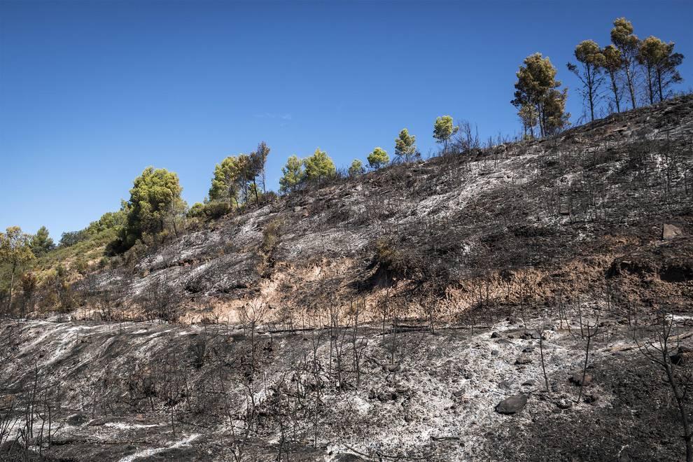 Incendio forestal en Javier (1/4) - El incendio de Javier ha afectado a unas 10 hectáreas, fundamentalmente pino - Sucesos -
