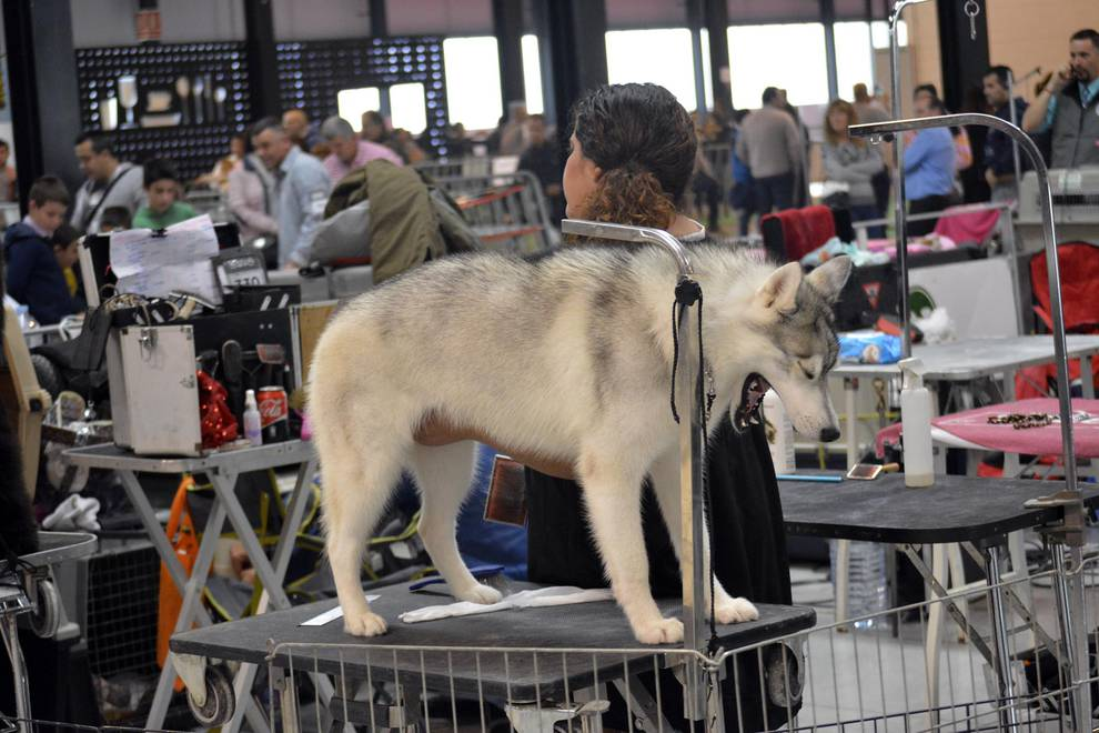 Exposición canina en Refena (1/43) - Exposición y exhibición de perros - Navarra -